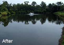Assisted_Living_Pond_Silver_Spring_MD_0.75_acres_AFTER_hydrilla_algae_duckweed_treatments-1