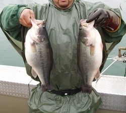 Fisheries Assessment