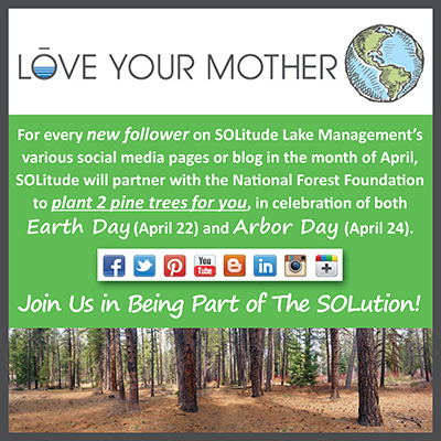 Earth Day_Arbor Day_Campaign_National Forest Foundation_TheSOLution