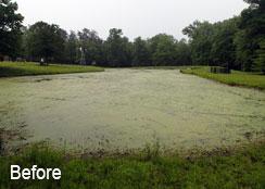 Pond Covered in Algae