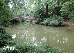 Campus_Pond_Williamsburg_VA_0.60_acres_AFTER_duckweed_watermeal_treatments_1