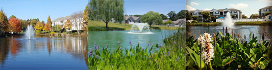 Enhance Your Community's Waterbody
