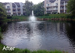 Community Stormwater Pond_Ashburn VA_0.25 acres_AFTER Filamentous algae treatments b.jpg