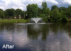 Community_Pond_Charlotte_NC_1.5_acres_AFTER_algae_treatments