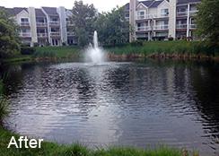 Community_Stormwater_Pond_Ashburn_VA_0.25_acres_AFTER_Filamentous_algae_treatments_b