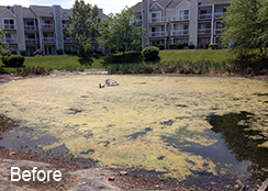 Community_Stormwater_Pond_Ashburn_VA_0.25_acres_BEFORE_Filamentous_algae_treatments_b