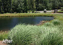 Community_Stormwater_Pond_Chapel_Hill_NC_0.4_acres_AFTER_algae_treatments