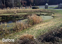 Community_Stormwater_Pond_Chapel_Hill_NC_0.4_acres_BEFORE_algae_treatments
