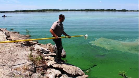 Cyanobacteria-1-1