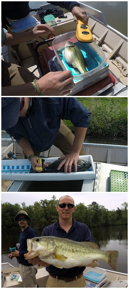Electrofishing_Private_Waters_Collage.jpg