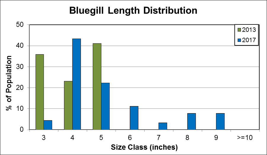 Bluegill Length Distribution