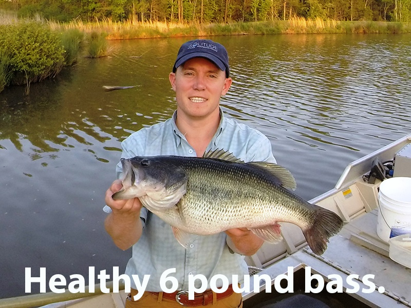 Healthy_6_pound_Bass_Dave_Beasley_caption_c