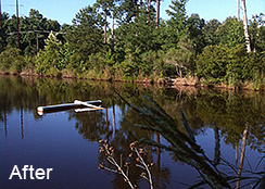 Irrigation_Pond_Raleigh_NC_0.60_acres_AFTER_aquatic_weed_treatments