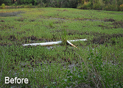 Irrigation_Pond_Raleigh_NC_0.60_acres_BEFORE_aquatic_weed_treatments
