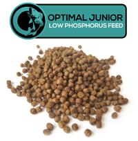 junior low-phosphorus feed