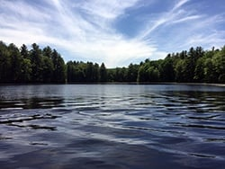 Lake_Wildwood_Upton_MA_fan_wort__variable_milfoil_40_acres_JOnorato_06.15_e.jpg