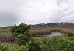 Mickill Pond_e.png