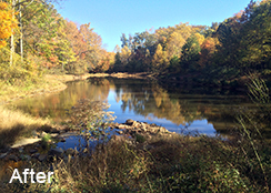 Municipal_Pond_Fairfax_VA_1.0_acre_AFTER_water_chestnut_treatments_1