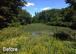Municipal_Pond_Fairfax_VA_1.0_acre_BEFORE_water_chestnut_treatments