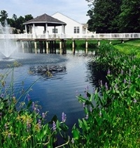 Pickerelweed_shoreline_buffer_Long_Neck_Shores_Pond_3_Millsboro_DE_Jason_L_06.15_e-548748-edited