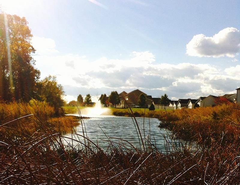 Pond_with_beneficial_buffer_buffer_close_up_CanneryVillage_MiltonDE_JasonL_11.14_c