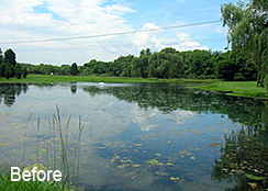 Private_Pond_Clear_Brook_VA_0.90_acres_BEFORE_various_treatments-1
