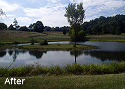 Private_Pond_Gordonsville_VA_0.75_acres_AFTER_water_shield_coontail_duckweed_treatments-1