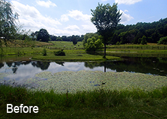 Private_Pond_Gordonsville_VA_0.75_acres_BEFORE_water_shield_coontail_duckweed_treatments_1