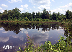 Private_Pond_Nathalie_VA_1.1_acres_AFTER_water_shield_treatments_1
