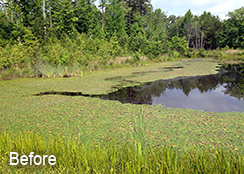 Private_Pond_Nathalie_VA_1.1_acres_BEFORE_water_shield_treatments_1