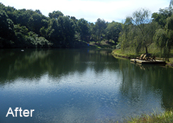 Private_Pond_Purcellville_VA_1.50_acres_AFTER_watermeal_algae_brittle_naiad_treatments