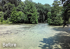 Private_Pond_Purcellville_VA_4.65_acres_BEFORE_hydrilla_and_watermeal_treatments