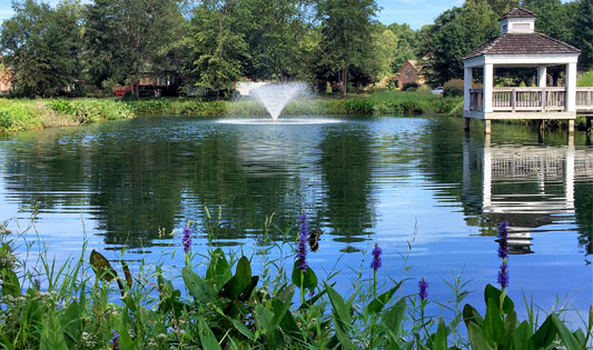 Proactive-Pond-Management