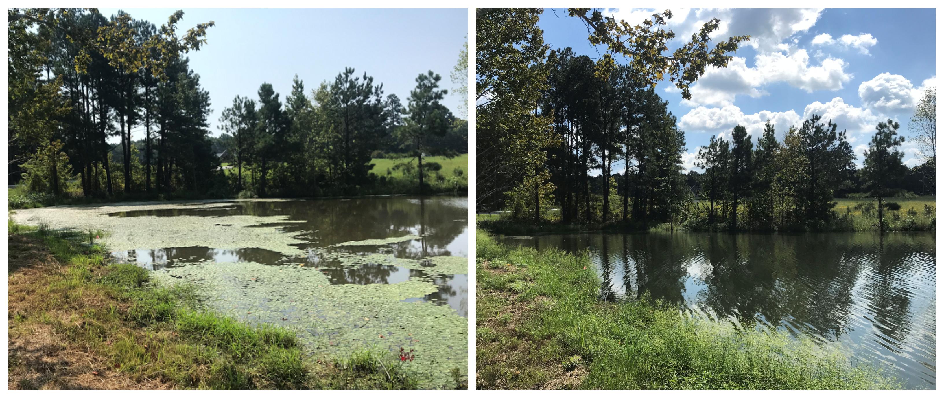 Watershield & Alligatorweed