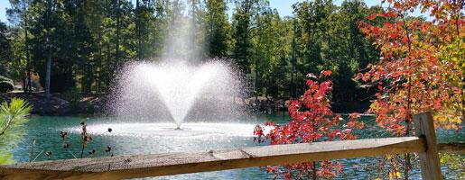 Enhance Your Aquatic Ecosystem