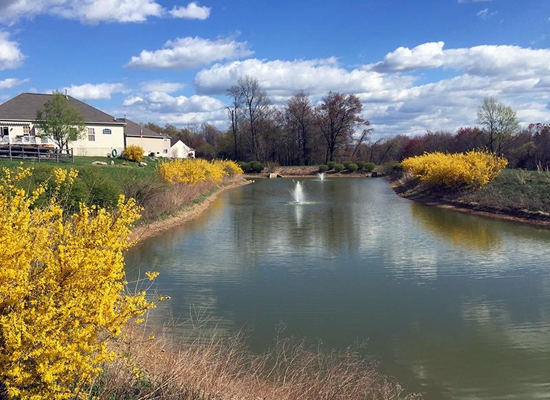 Spring_Scenic_Pond_Brook_Crossing_Coatsville_PA_04.15_JohnP_c