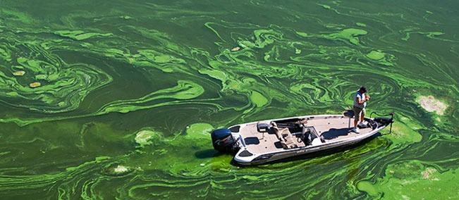 The-Impact-of-Phosphorus-Pollution-on-Water-Bodies_SePRO Blog