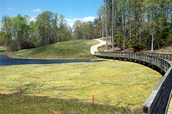 VA golf course - flamentous algae_e.jpg