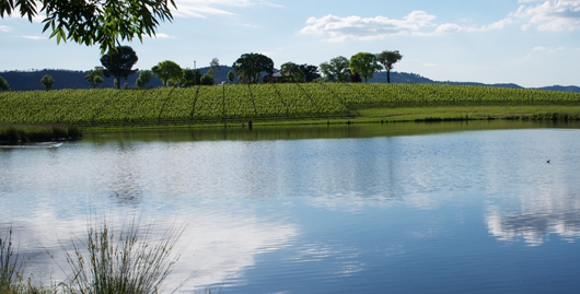 vineyard pond