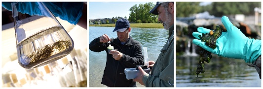 How to test water quality