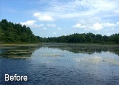 Aquatic Invasive Plants Investing Lake