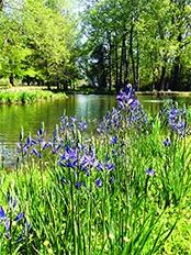 aquatic-vegetation-management.jpg
