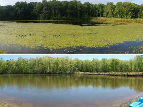 Before & After - SOLitude Lake Management
