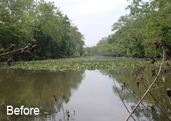 Pond Covered In Invasive Plants and Algae Blooms