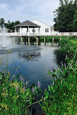 beneficial-vegetation-in-pond-with-aeration.jpg