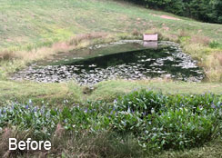 Algae Developed In Stormwater Pond