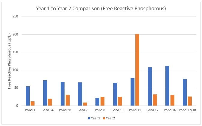 Year 1 to Year 2 Comparison of Free Reactive Phosphorous