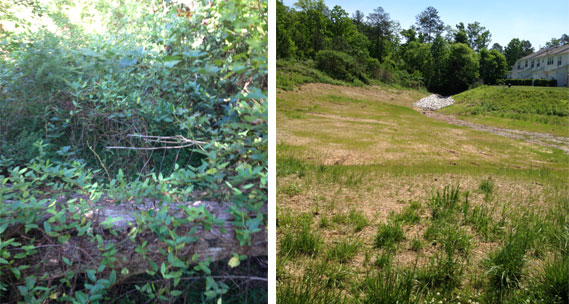 Removal of Overgrown Vegetation In Stormwater Retention Basin