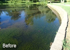 Hydrilla Infested Pond