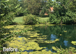 Duckweed and Filamentous Algae Blooms
